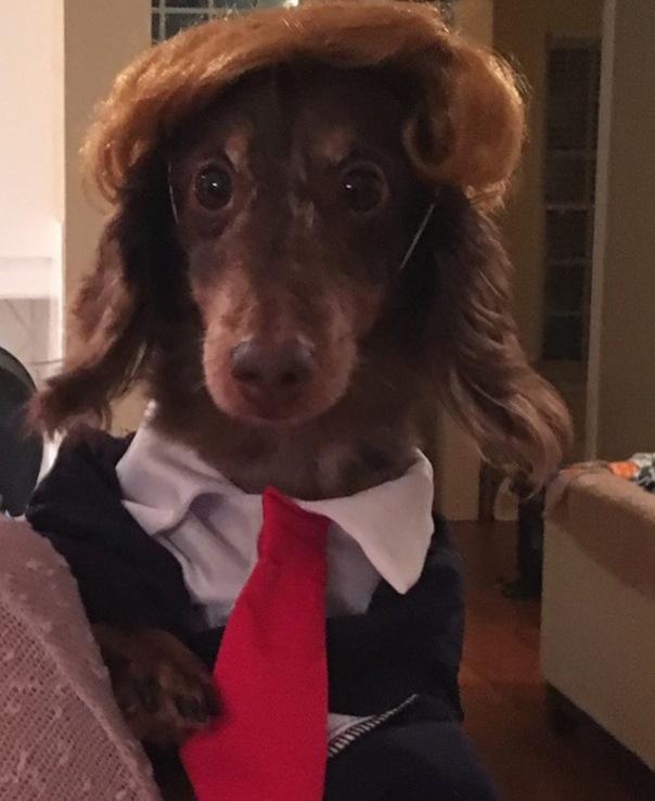 Halloween dog costumes - Westpoppn.com